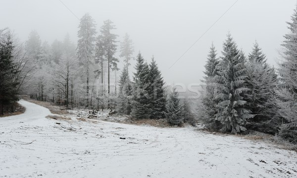 Winter forest with snow Stock photo © ondrej83