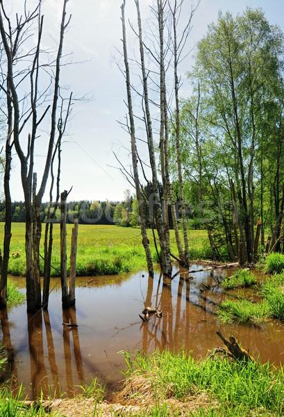 Piccolo palude bordo primavera verde prato Foto d'archivio © ondrej83