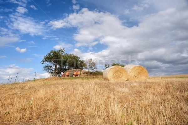 Szalmaszál legelő kék ég tájkép mező ősz Stock fotó © ondrej83