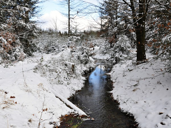 Winter creek Stock photo © ondrej83