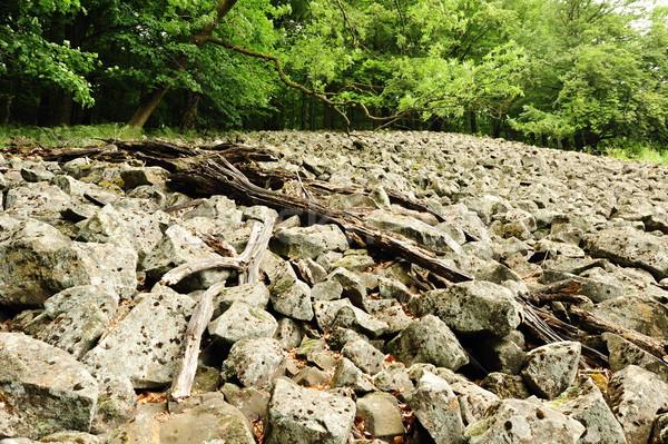 морем камней мох дерево лес природы Сток-фото © ondrej83