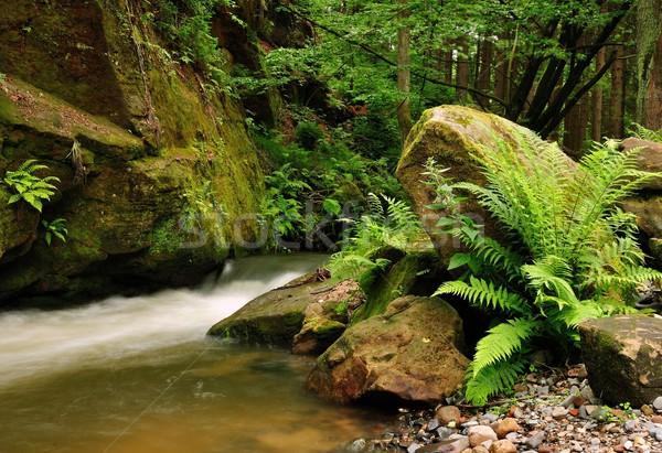 Foto d'archivio: Fiume · piccolo · selvatico · panorama · rocce · albero