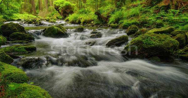 Sauvage printemps rivière courir bois pierres Photo stock © ondrej83