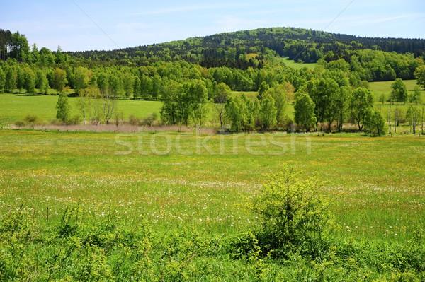 緑 春 風景 美しい 新鮮な フィールド ストックフォト © ondrej83