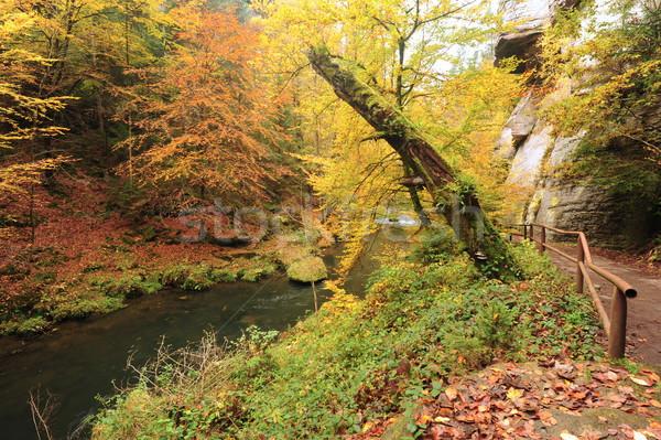 Automne couleurs rivière arbres laisse Photo stock © ondrej83