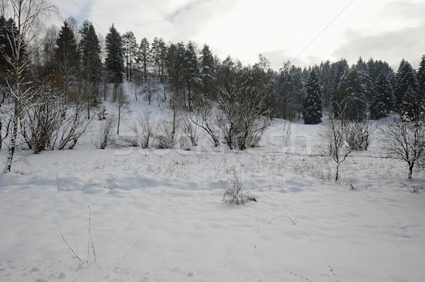 Winter Landschaft Bohemien Schweiz Schnee Stock foto © ondrej83