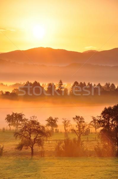 Stock photo: Autumn fog