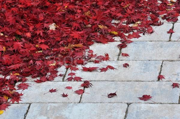 Rouge laisse trottoir vers le bas feuille pierre Photo stock © ondrej83