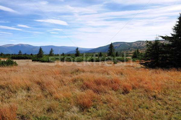 мнение пейзаж красивой красочный осень растений Сток-фото © ondrej83