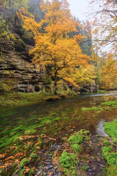 Sonbahar renkler nehir renkli ağaçlar yaprakları Stok fotoğraf © ondrej83