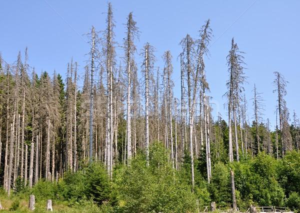 лес разрушенный Кора жук среде Сток-фото © ondrej83
