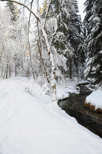Winter landschap boheems sneeuw tsjechisch boom Stockfoto © ondrej83