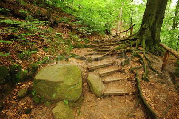 Orman yol kayalar eski bahar bitkiler Stok fotoğraf © ondrej83
