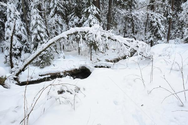 Winter kreek boheems Zwitserland sneeuw tsjechisch Stockfoto © ondrej83