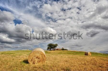 Słomy łące Błękitne niebo krajobraz dziedzinie jesienią Zdjęcia stock © ondrej83