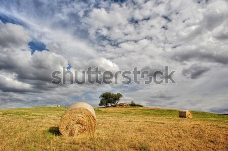 Straw bales Stock photo © ondrej83