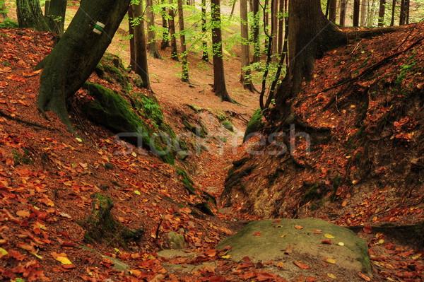 Autunno foresta colorato alberi foglie pietra Foto d'archivio © ondrej83