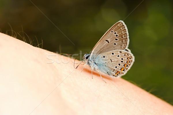 мало синий бабочка красивой сидят рук Сток-фото © ondrej83