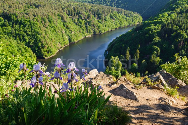 Stock photo: View of river