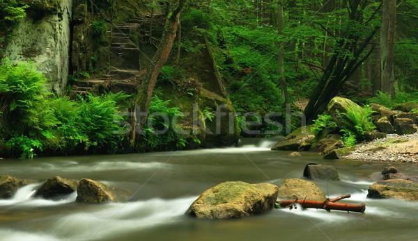 Rzeki mały krajobraz skał liści Zdjęcia stock © ondrej83