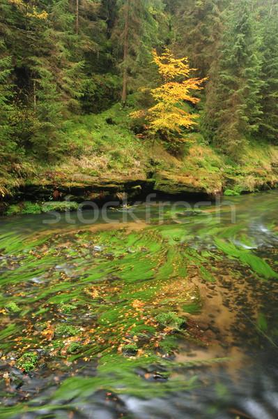 Foto stock: Outono · cores · rio · árvores · folhas