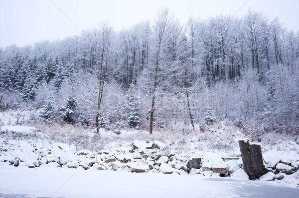 зима пейзаж глубокий лес покрытый снега Сток-фото © ondrej83