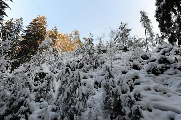 Stok fotoğraf: Kış · manzara · bohem · İsviçre · kar · Çek