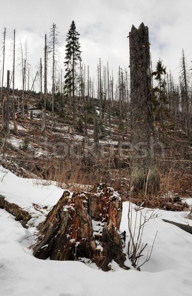 Neve blizzard foresta boschi inizio primavera Foto d'archivio © ondrej83