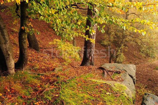 Autumn forest with fog Stock photo © ondrej83