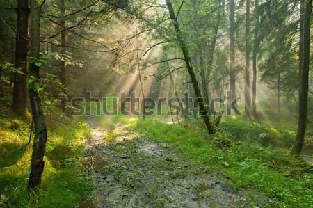 Misty foresta misterioso verde vecchio nebbia Foto d'archivio © ondrej83