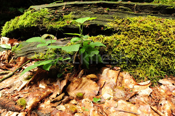 Moss and fern Stock photo © ondrej83