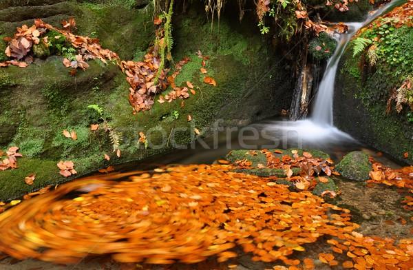 Otono arroyo colorido hojas muchos piedras Foto stock © ondrej83
