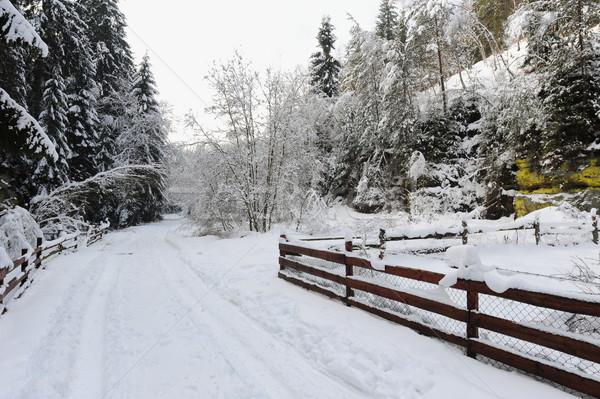 冬 風景 自由奔放な 雪 チェコ語 ツリー ストックフォト © ondrej83
