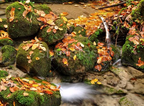 осень ручей красочный листьев многие камней Сток-фото © ondrej83