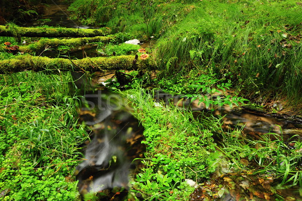 мало реке небольшой красивой зеленый долины Сток-фото © ondrej83