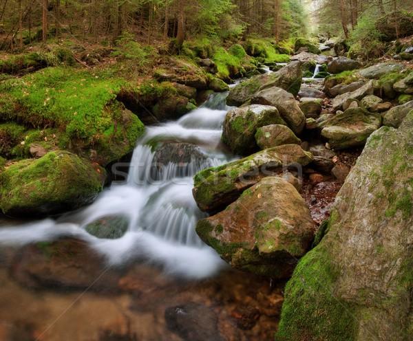 Wiosną zatoczka kanał mech drzewo Zdjęcia stock © ondrej83