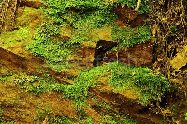 Texture pierre mousse rêche vert printemps Photo stock © ondrej83