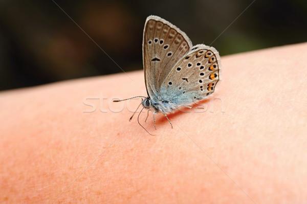 青 蝶 美しい 座って 手 ストックフォト © ondrej83