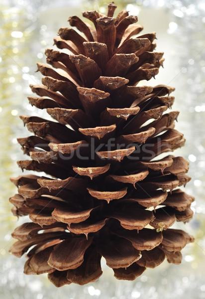 Christmas dekoracji sosny stożek biały Zdjęcia stock © ondrej83