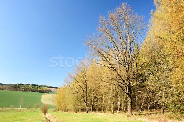Güzel bahar manzara orman çayır mavi gökyüzü Stok fotoğraf © ondrej83
