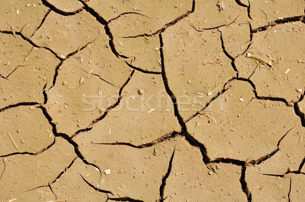 Wide cracks in the dried up ground  Stock photo © ondrej83