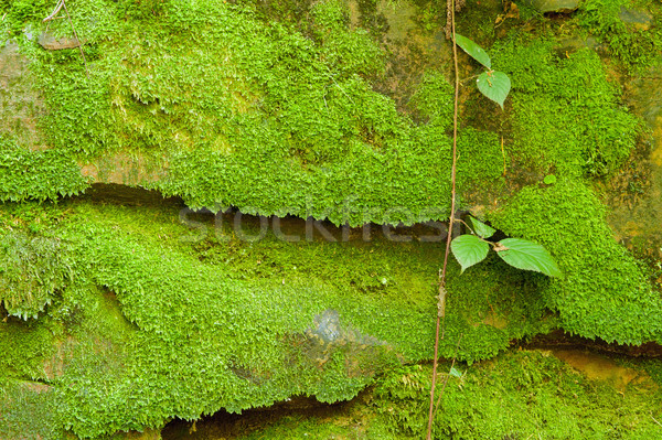 Texture of stone with moss Stock photo © ondrej83