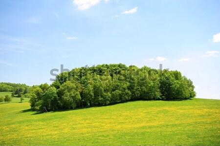 Zielone wiosną krajobraz piękna świeże pola Zdjęcia stock © ondrej83