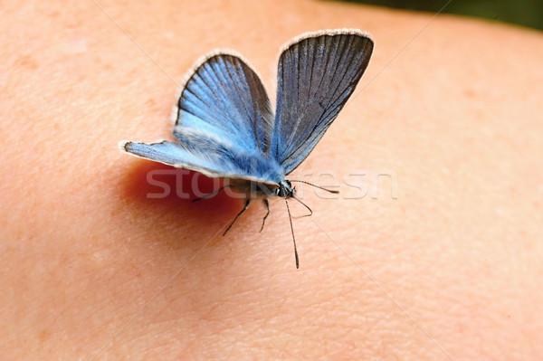 Peu bleu papillon belle séance mains Photo stock © ondrej83