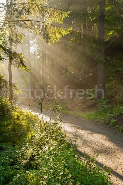 Słońce promienie lesie słońca przeciwmgielne Zdjęcia stock © ondrej83