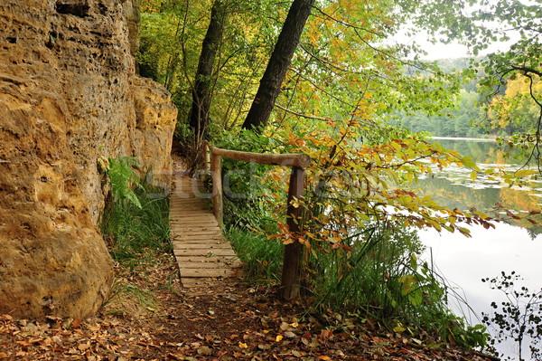 Footbridge in the woods Stock photo © ondrej83