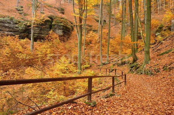 秋 森林 カラフル 下がり 葉 方法 ストックフォト © ondrej83