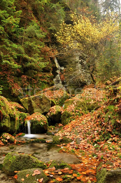Stock photo: Autumn creek
