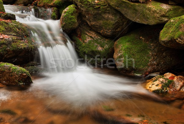 Primavera arroyo canal musgo árbol Foto stock © ondrej83