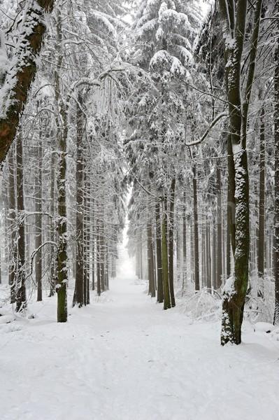 Zimą lasu drogowego śniegu pokryty wieczór Zdjęcia stock © ondrej83